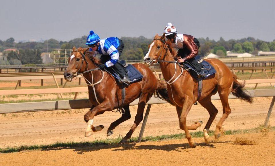 Horses work on Randjesfontein track.