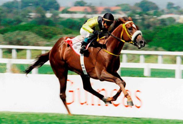 Horse Chestnut.