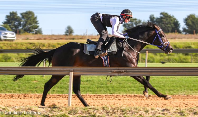 Malmoos (Luke Ferraris) on the gallop track.